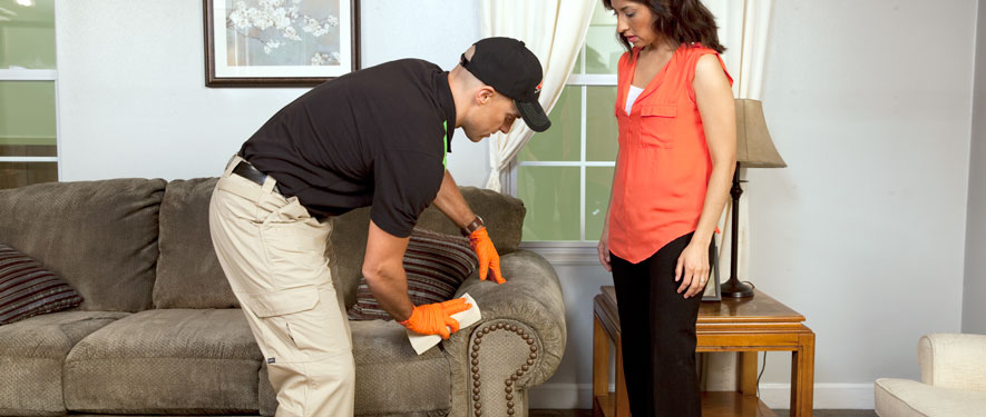 Brighton, MI carpet upholstery cleaning